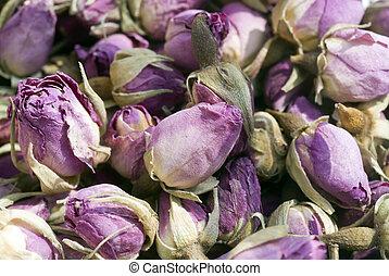 Purple Roses laying criss-cross