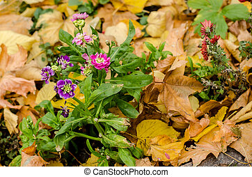Purple small flowers on the background of yellow autumn leaves.
