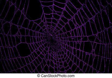 Purple Spider Web - Purple spider web against a black...