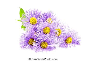 Purple spring flower over white