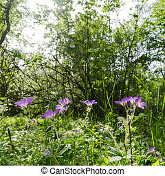 Purple summer flowers in a lush greenery