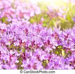 purple summer flowers in the meadow