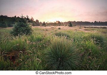 summer sunrise on green meadow