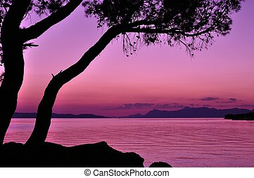 Purple sunset with tree silhouette