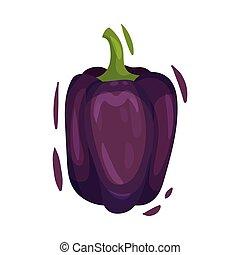 Purple sweet pepper. Vector illustration on white background.