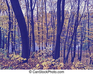 Purple toned graphical panorama of autumn forest