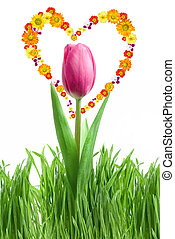 purple tulip and green grass with heart from flowers isolated on white