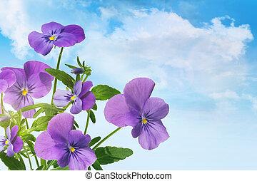 Purple violet flowers against a blue sky