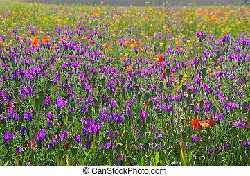 Purple Vipers Bugloss 04