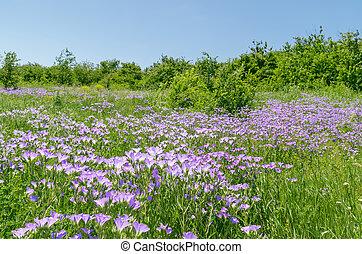 purple wild flowers in green meadow