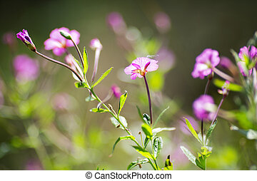 purple wild flowers on a background of blurred greens