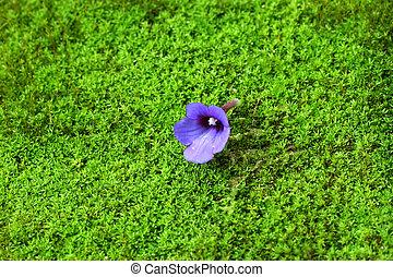 Purple wild flowers on the moss.