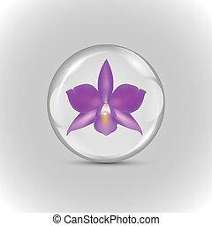 purpur, boll, orkidé