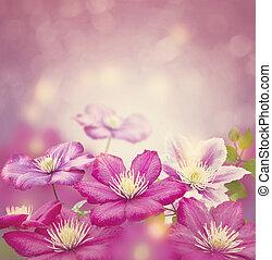 purpur, klematis, blomningen