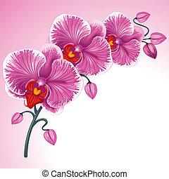 purpur, orkidé