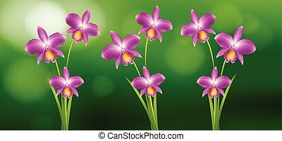 purpur, trädgård, orkidé