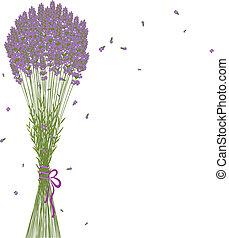 purpurfärgad blomma, lavendel, bakgrund