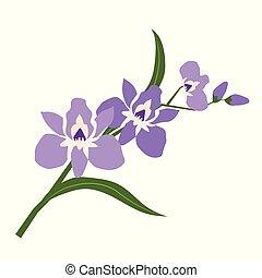 purpurfärgad blomma, natur, orkidé