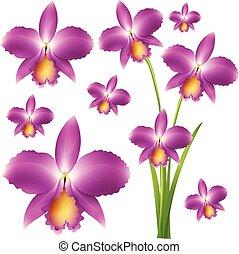 purpurfärgade blommor, seamless, orkidé