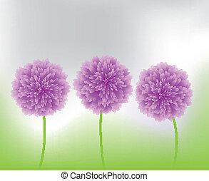 purpurne blumen, natur