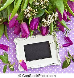 purpurowy, świeży, tulipany
