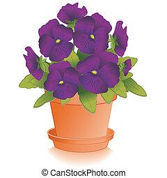 purpurowy, bratek, kwiaty, doniczka