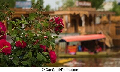 purpurowy, nadjeziorny, kwiaty, dom, przód