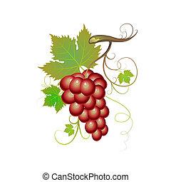purpurowy, winogrona
