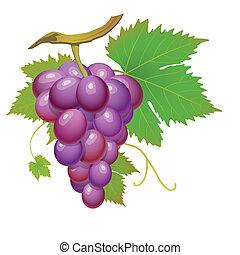 purpurowy, winogrono