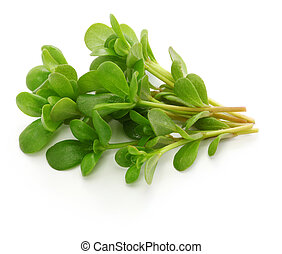 purslane, comestible, frais, mauvaises herbes