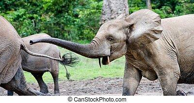 Pursuit. The elephant attacks.