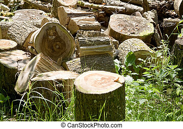 Cut pieces of logs for the firelighter of rural stove
