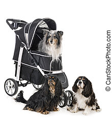 pushchair for dog in front of white background