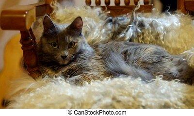 Pussy cat lying on sheepskin full HD.