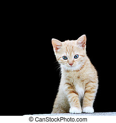 Pussy  - Playful kitten in wait for prey position