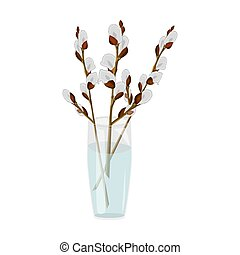 Pussy willow branches in glass vase isolated on white background.