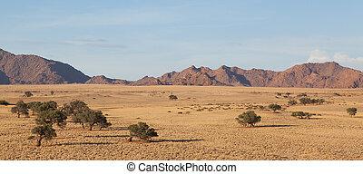 pustynia krajobraz, z, obsiewa trawą, czerwony piasek, urgensy, i, na, afrykanin, akacjowe drzewo, sossusvlei, namibia, południowa afryka