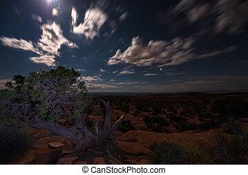 pustynia noc