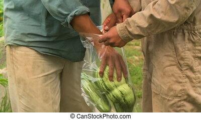 Putting Melons Inside A Plastic Bag, Bolivia