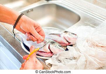 putzen, fische, flossen, entfernen