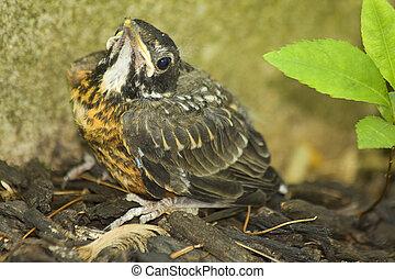 Puzzled Baby Bird
