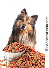 Puzzled looking dog with food bowl - Cute little Sheltie or...