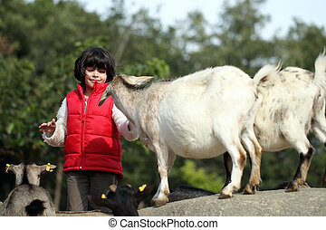 Pygmy goat and girl
