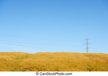 Pylons on a yellow field