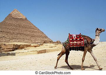 Pyramid of Chefren, Giza, Egypt - A camel runs away near the...