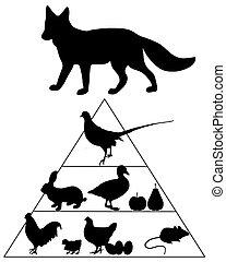 pyramide nourriture, renard, guide