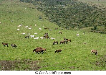 pyrenees, cavalo, prado verde, paisagem