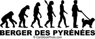Pyrenees Shepherd evolution german