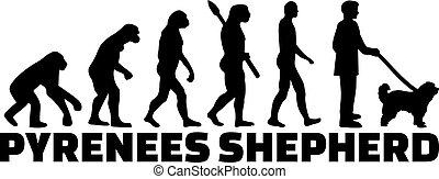 Pyrenees Shepherd Evolution