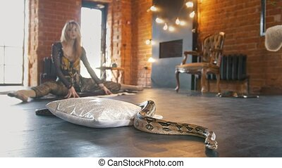 Python in a studio in front of beautiful woman dancer, close...